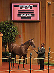 Hip #210 Unbridled's Song - Queen of Money filly consigned by Frankfort Park sold for $340,000 at the Keeneland September Yearling Sale.  September 11, 2012.