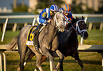 HALLANDALE FL - FEBRUARY 27: Mohaymen #6, ridden by Junior Alvarado overtakes Zulu #2, ridden by John R. Velazquez off the turn en route to winning the Xpressbet.com Fountain of Youth Stakes at Gulfstream Park on February 27, 2016 in Hallandale, Florida.(Photo by Alex Evers/Eclipse Sportswire/Getty Images)