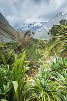 Copland track through alpine vegetation in upper Copland Valley, Westland National Park, West Coast, World Heritage Area, South Westland, New Zealand