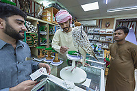 "United Arab Emirates (UAE). Dubai. Falcon & Heritage Sports Centre. The shop sells falcons and all equipment needed for falconry. All three men are from Pakistan. The man (C) works for an Emirati man. He brought the falcon to fix a new ring on the animal's leg because the old one got lost. A salesman (L) controls the falcon's passport which was issued by the Ministry of Environment and Water (according to the Convention International Trade Endangered Species of Wild Fauna & Flora). The passport is valid for three years and has an ID number corresponding to the ring which falcons are required to wear on leg. Before getting a new ring, he makes sure that the papers are in order, as part fighting illegal smuggling of falcons in the country. Border control officials are required to validate the falcon's international movements just like they would any other passenger, verifying and stamping the passports. Falcons are birds of prey in the genus Falco, which includes about 40 species. Adult falcons have thin, tapered wings, which enable them to fly at high speed and change direction rapidly. Additionally, they have keen eyesight for detecting food at a distance or during flight, strong feet equipped with talons for grasping or killing prey, and powerful, curved beaks for tearing flesh. Falcons kill with their beaks, using a ""tooth"" on the side of their beaks. The United Arab Emirates (UAE) is a country in Western Asia at the northeast end of the Arabian Peninsula. 16.02.2020  © 2020 Didier Ruef"