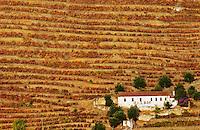 autumn colours vineyards calem douro portugal
