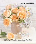 Alfredo, FLOWERS, BLUMEN, FLORES, photos+++++,BRTOLMN39716,#f#, EVERYDAY