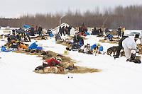 Teams rest at the Nikolai checkpoint on Tuesday during Iditarod 2008