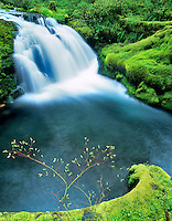 Spring growth and unnamed falls on White Branch of Lost Creek. Three Sisters Wilderness, Oregon