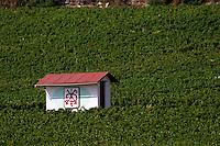 vineyard hut chambertin clos de beze gc gevrey-ch cote de nuits burgundy france