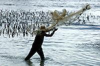 FISHERMAN CASTING HIS NET CHUUK, MICRONESIA, PACIFIC,