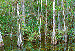 Big cypress swamp, Everglades National Park, Florida