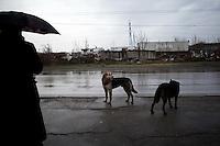 BULGARIA, Sofia, 2012/04/5..Stray dogs roam the streets of Lyulin quarter in Sofia, Bulgaria..BULGARIE, Sofia, 2012/04/5..Des chiens errants sillonnent les rues du quartier de Lyulin à Sofia, Bulgarie..© Pierre Marsaut