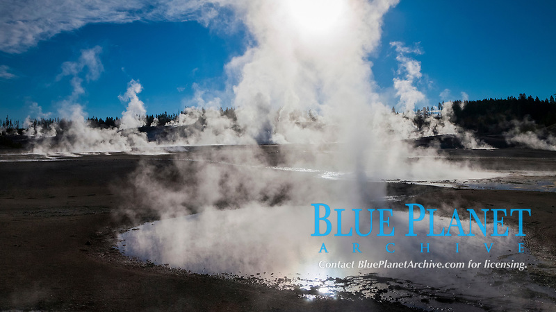 Steam rises at sunrise in Norris Geyser Basin,  Located at the intersection of three tectonic faults, Norris Geyser Basin is the hottest and most active geothermal area in Yellowstone National Park, Wyoming, USA