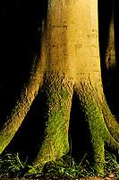 GERMANY, Nationalpark Jasmund, Rugen, beech forest / Mecklenburg-Vorpommern, intakter Wald, Laubwald mit Buchen im Nationalpark Jasmund