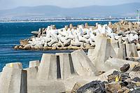 Tetrapoden als Küstenschutz: AFRIKA, SUEDAFRIKA, 18.01.2020: Tetrapoden als Küstenschutz
