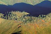 Araucaria Bernieri, Humbolt