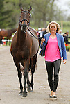 LEXINGTON, KY - APRIL 27: #42 A Little Romance and rider, Jessica Phoenix jog before the vets and grand jury during the first horse inspection for the Rolex Three Day Event on Wednesday April 27, 2016 in Lexington, Kentucky. (Photo by Candice Chavez/Eclipse Sportswire/Getty Images)