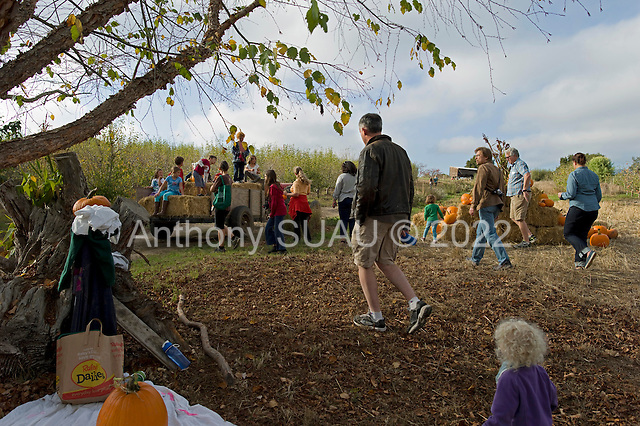 Watsonville, California<br /> October 19, 2012<br /> <br /> Live Earth Farmer run by owner farmer Tom Broz, holds 1 of 3 annual harvest festivals for their community supported agriculture (CSA) members and friends in the community.