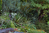 The Dry Bank with Yucca, variegated succulent in Elisabeth Miller Botanical Garden