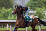 DEC 12,2015: Cirrus Des Aigles ,trained by Corin Barande-Barbe,exercises in preparation for the Hong Kong Vase at Sha Tin in New Territories,Hong Kong. Kazushi Ishida/ESW/CSM