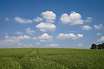 Europa, DEU, Deutschland, Nordrhein Westfalen, NRW, Rheinland, Niederrhein, Xanten, Agrarlandschaft, Fuerstenberg, Feld, Acker, Himmel, Wolken, Kategorien und Themen, Landwirtschaft, Landwirtschaftlich, Agrar, Agrarwirtschaft, Natur, Naturfoto, Naturfotos, Naturfotografie, Naturphoto, Naturphotographie, Landschaft, Landschaften, Landschaftsfoto, Landschaftsfotografie, Landschaftsphoto, Landschaftsphotographie......[Fuer die Nutzung gelten die jeweils gueltigen Allgemeinen Liefer-und Geschaeftsbedingungen. Nutzung nur gegen Verwendungsmeldung und Nachweis. Download der AGB unter http://www.image-box.com oder werden auf Anfrage zugesendet. Freigabe ist vorher erforderlich. Jede Nutzung des Fotos ist honorarpflichtig gemaess derzeit gueltiger MFM Liste - Kontakt, Uwe Schmid-Fotografie, Duisburg, Tel. (+49).2065.677997, schmid.uwe@onlinehome.de, www.image-box.com]