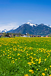 Deutschland, Bayern, Oberbayern, Chiemgau, Staudach-Egerndach: Dorf und Ferienort mit Pfarrkirche vor den Chiemgauer Bergen im Fruehling | Germany, Upper Bavaria, Chiemgau, Staudach-Egerndach: village with parish church, Chiemgau mountains, Bavarian Alps, at springtime