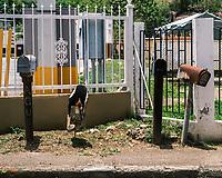 Buzones Rurales de Puerto Rico #streetphotography #documentary #puertorico #rural #mailboxes #ruralmailboxes