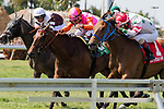 HALLANDALE BEACH, FL - APRIL 01:  #1 Conquest Hardcandy with Edgard Zayas up wins the Sanibel Island Stakes  Florida Derby Day at Gulfstream Park, Hallandale Beach, FL. (Photo by Arron Haggart/Eclipse Sportswire/Getty Images)