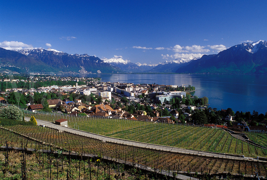 Lavaux, Switzerland, Vevey, Vaud, Lake Geneva, Alps, Europe, Scenic view of the city of Vevey and the Alps along the lakeshore of Lac Leman in the spring in the Canton of Vaud.