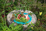 Butterfly feeder with water melon.
