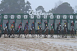 February 22, 2015: The horses leaving the starting gate in the South West Stakes (Grade III) at Oaklawn Park in Hot Springs, AR. Justin Manning/ESW/CSM