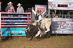 SEBRA - Jane Lew, WV - 7.18.2014 - Bulls & Action