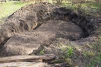 Anlage eines Sandariums im Garten, Schritt 1: es wird eine Grube ausgehoben und am Rand der Grube wird eine Art Graben geschaufelt, in den später Eichenspaltpfähle als Umrandung gesetzt werden können. Sandarium, Sand, Sandfläche, Sandhaufen im Garten, Naturgarten, Nisthilfe für Wildbienen und solitäre Wespen, Lebensraum für Eidechsen, Eidechse. Soll verschiedenen Insekten als Unterschlupf, Nistplatz, und Nahrungsquelle dienen. Mehr als die Hälfte der Wildbienenarten, welche Nester bauen, nisten im Erdboden. Wildbienen-Nisthilfen, Wildbienen-Nisthilfe selbermachen, selber machen, Wildbienenhotel, Insektenhotel, Wildbienen-Hotel, Insekten-Hotel