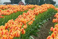 FLOWERS & NATURAL FLORA