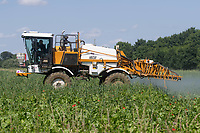 19.7.2021 A Contractor spraying organic fodder beet with salt - x <br /> ©Tim Scrivener Photographer 07850 303986<br />      ....Covering Agriculture In The UK....
