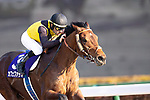 FUCHU,JAPAN-FEB 21: Cafe Pharoah,ridden by Christophe Lemaire,wins the February Stakes at Tokyo Racecourse on February 21,2021 in Fuchu,Tokyo,Japan. Kaz Ishida/Eclipse Sportswire/CSM