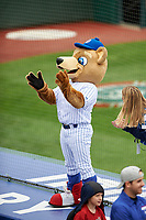 South Bend Cubs mascot Stu during a Midwest League game against the Cedar Rapids Kernels at Four Winds Field on May 8, 2019 in South Bend, Indiana. South Bend defeated Cedar Rapids 2-1. (Zachary Lucy/Four Seam Images)