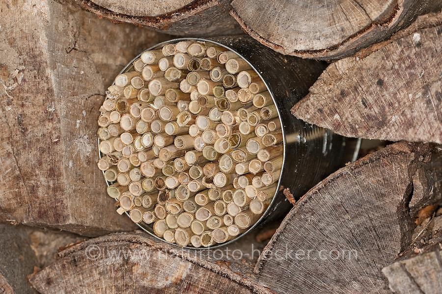 Nisthilfe für Wildbienen. Dazu wird Schilf auf Länge geschnitten und in einer Konservendose gebündelt. In die hohlen Stängeln können Wildbienen ihre Eier legen. Insektenhotel