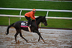 October 28, 2015:  Andreya's Reward, trained by Milton W. Wolfson and owned by NTS Stable & Kathryn Davey, exercises in preparation for the Breeders' Cup Juvenile Fillies Turf at Keeneland Race Track in Lexington, Kentucky on October 28, 2015. John Voorhees/ESW/CSM