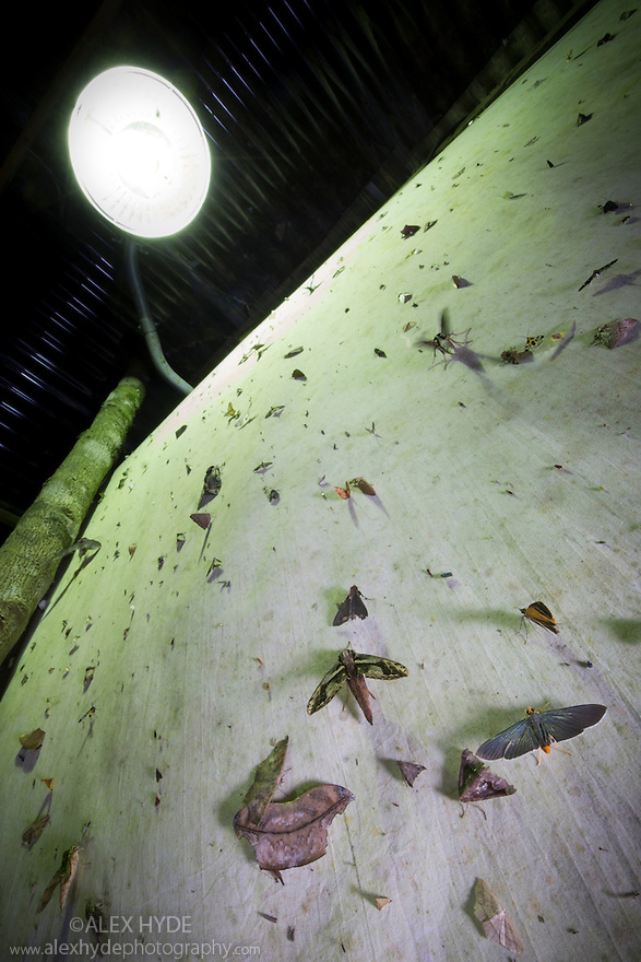Moths attracted to light trap in the rainforest at night. Cordillera de Talamanca mountain range, Caribbean Slopes, Costa Rica. May.