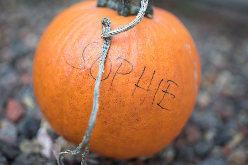 For today's photo, my daughter brought home her first pumpkin from her kindergarten fieldtrip a few days ago. It is bright orange, and it caught my attention.