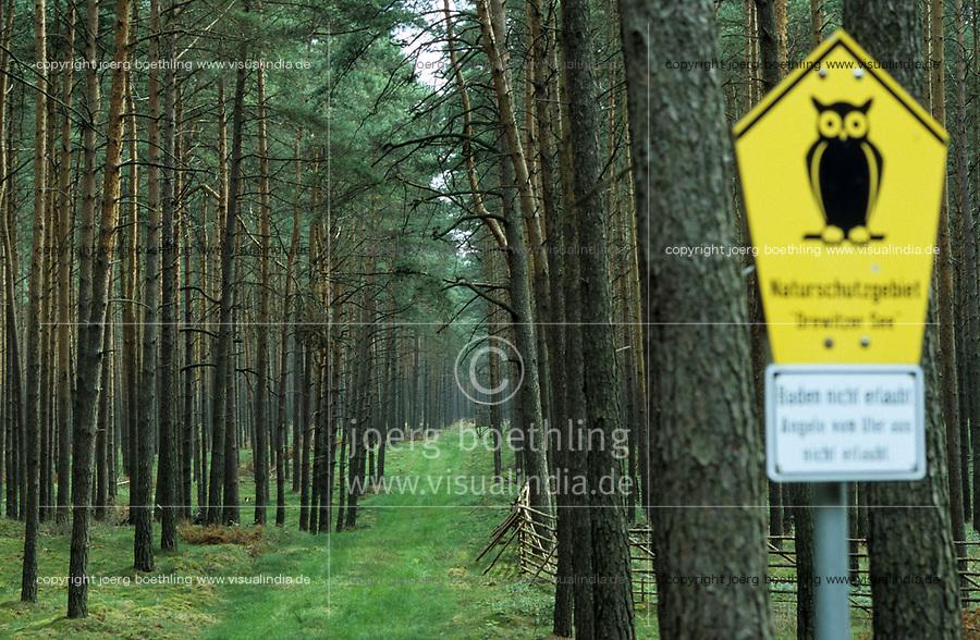 GERMANY, pine forest in nature protected area / DEUTSCHLAND, MV, Drewitzer See, Kiefernwald im Naturschutzgebiet