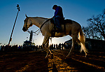 LOUISVILLE, KY - APRIL 30: Trainer Steve Asmussen follows his Kentucky Derby hopeful Combatant to the track at Churchill Downs on April 30, 2018 in Louisville, Kentucky. (Photo by Scott Serio/Eclipse Sportswire/Getty Images)