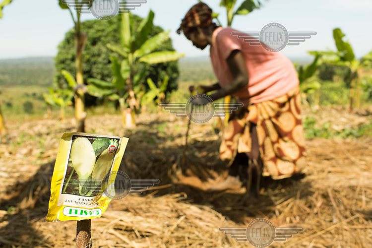 A packet of eggplant seeds attached to a stick in a kitchen garden farmed by Gertrude Ndolikye (51) who is HIV+ and being treated with ARVs.