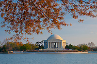 Jefferson Memorial In Washington DC during Cherry Blossom festival