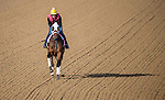 APRIL 27, 2014: Aurelia's Belle, trained by Wayne Catalano, exercises in preparation for the Kentucky Oaks at Churchill Downs in Louisville, KY. Jon Durr/ESW/CSM