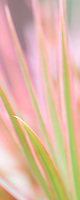 Soft pastel colors and lines of Hawaiin flora.