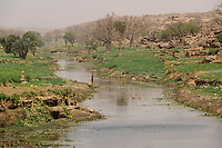 MALI,  Bandiagara, Dogonland, habitat of the ethnic group Dogon, irrigated fileds at small river