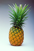 Spectacular close-up of a just-picked golden ripe pineapple against a neutral white/grey background.