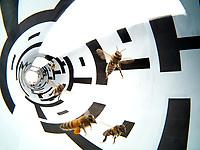 Honey bee Science pictures