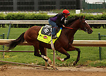 LOUISVILLE, KY - APRIL 23: Brody's Cause (Giant's Causeway x Sweet Breanna, by Sahm) works 5 furlongs in 1:01.8 with exercise rider Tammy Fox in preparation for the Kentucky Derby. Churchill Downs, Louisville KY. Owner Albaugh Family Stable, trainer Dale L. Romans. (Photo by Mary M. Meek/Eclipse Sportswire/Getty Images)