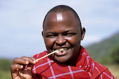 Lolgorian, Kenya. Leonard, a Siria Maasai man, cleaning his teeth with a chewstick natural toothbrush. Salvadora persica (eremit in Maasai)