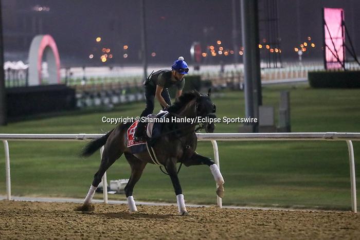 March 25, 2021: Dubai World Cup contender Jesus' Team trains on the track for trainer Jose D'Angelo at Meydan Racecourse, Dubai, UAE.<br /> Shamela Hanley/Eclipse Sportswire/CSM