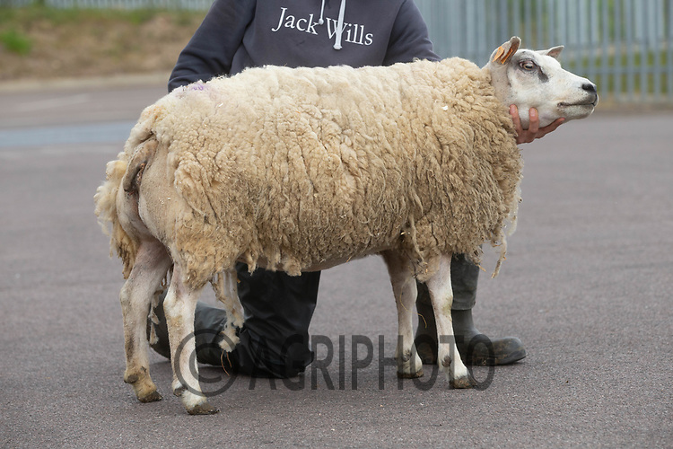1-5-2021 Melton Mowbray Spring Fling<br /> ©Tim Scrivener Photographer 07850 303986<br />      ....Covering Agriculture In The UK....